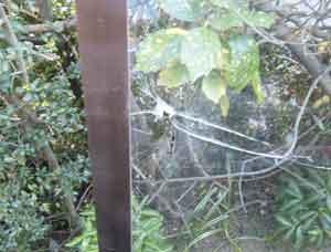 荒川区で空き巣被害の窓ガラス